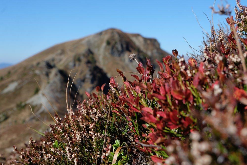 Herbstfarben beim Grasberg- wandern im Pinzgau | Österreich