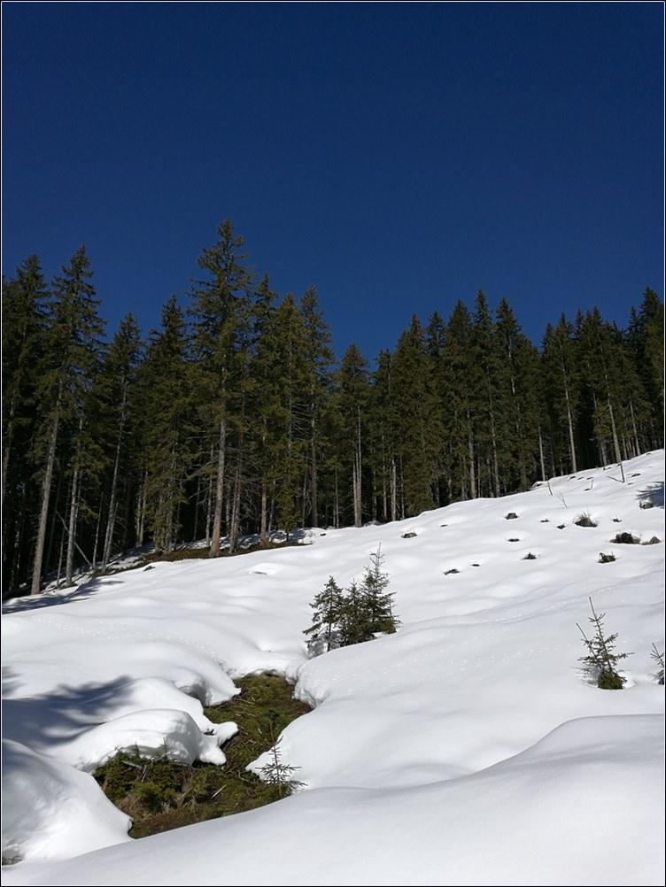 Ab der Baumgrenze kann man Sonne, Schnee und blauen Himmel genießen. | Rossbrand bei Radstadt, Österreich