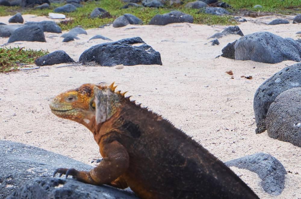 Galapagos - einen Traum erfüllen