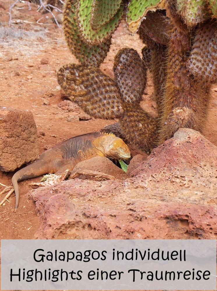 Pin mich: Traumreise auf die Galapagos Inseln | Gipfelglück Blog