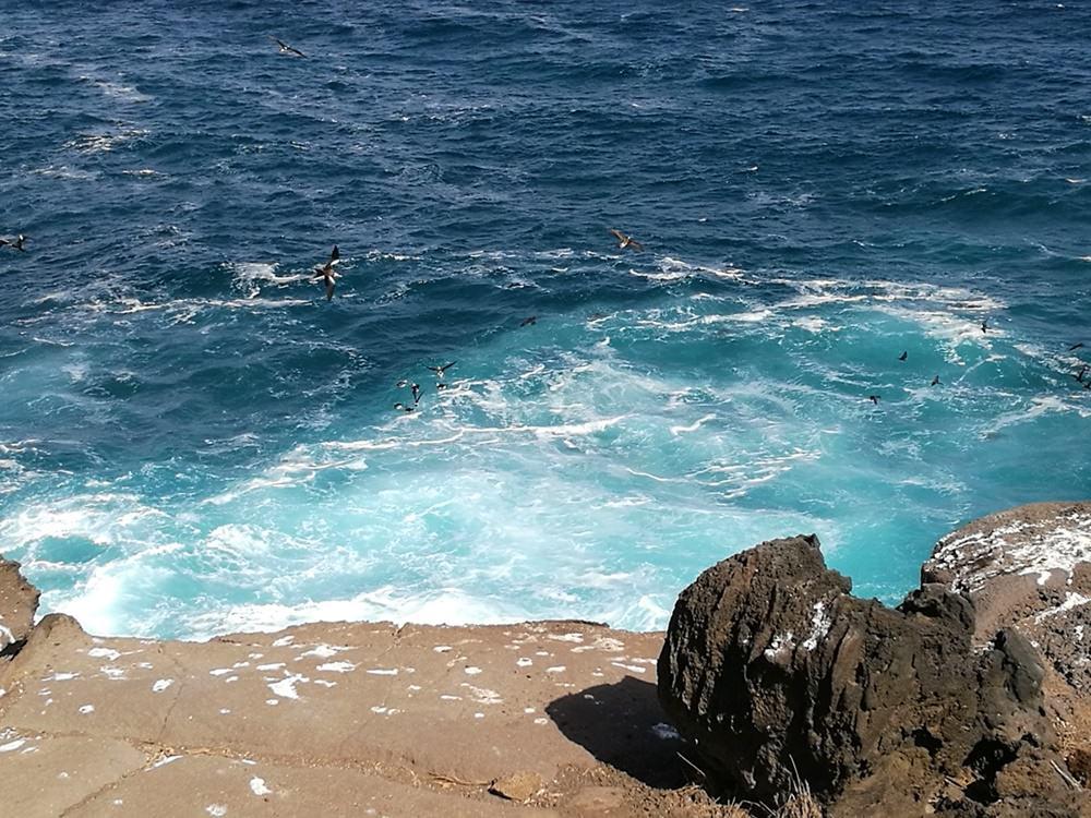 Schildkröten beobachten - an den Klippen von La Lobería | Galapagos