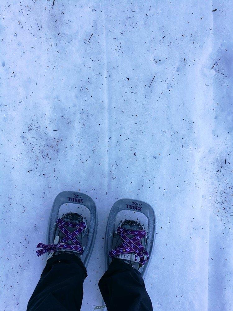Schmutziger Schnee im Wald - Tannennadeln, Äste, Erde, Matsch... Zeichen von Frühling.