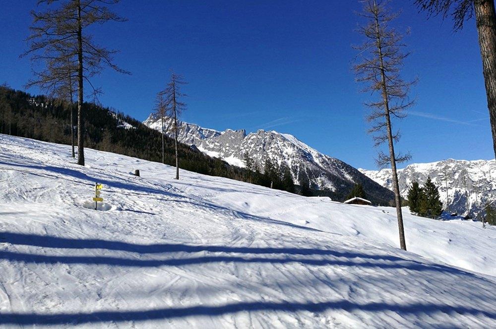 Wo der Wald endet, wartet die sonnige Stubenalm. | Nationalpark Berchtesgaden