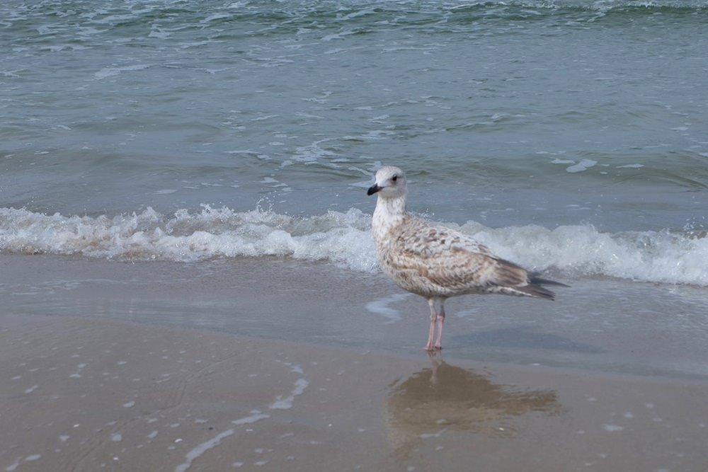 Möwe am Strand von Rügen