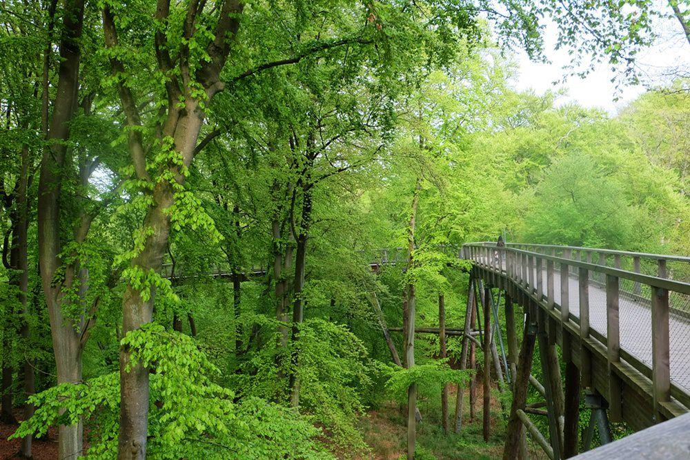 Baumwipfelpfad im Naturerbe Zentrum in Rügen in Prora
