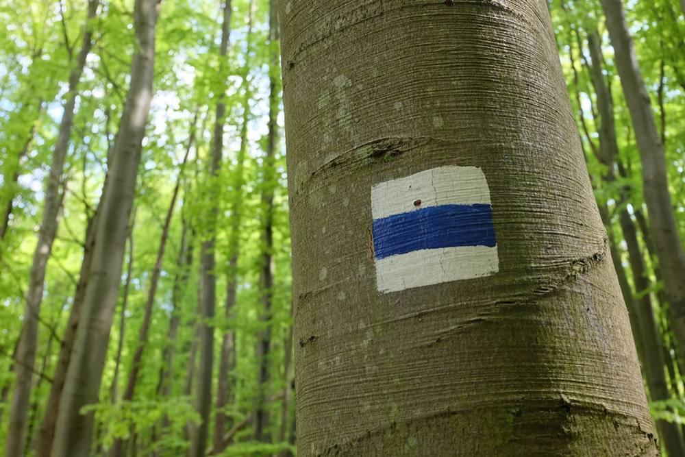 Wandern im Buchen-Wald Kulturerbe auf Rügen