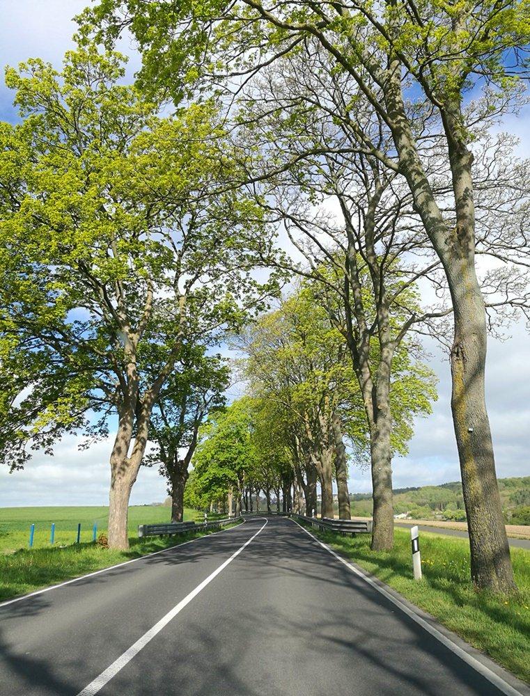 So wenig Autos, dass man kurz auf der Straße anhalten und schnell die Allee fotografieren kann... Frühling in Rügen