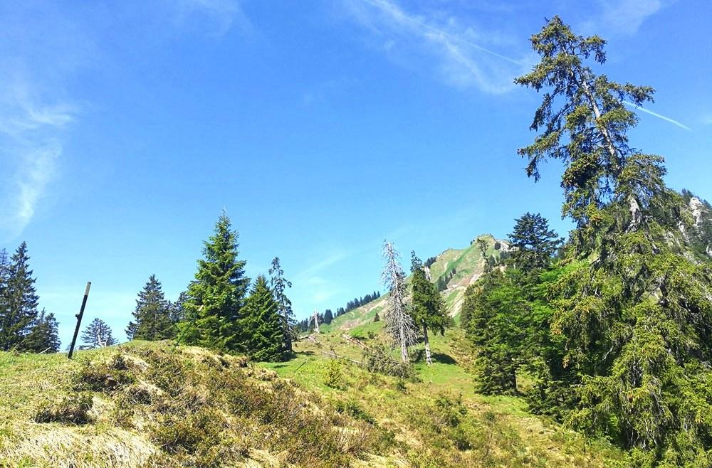 Hellgrün und grau, an der Baumgrenze findet man noch keine Sommerfarben | Bischofsfellnalm, Chiemgau