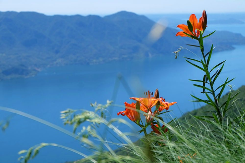 Idylle über dem Lago Maggiore, wo man einst Krieg führte.