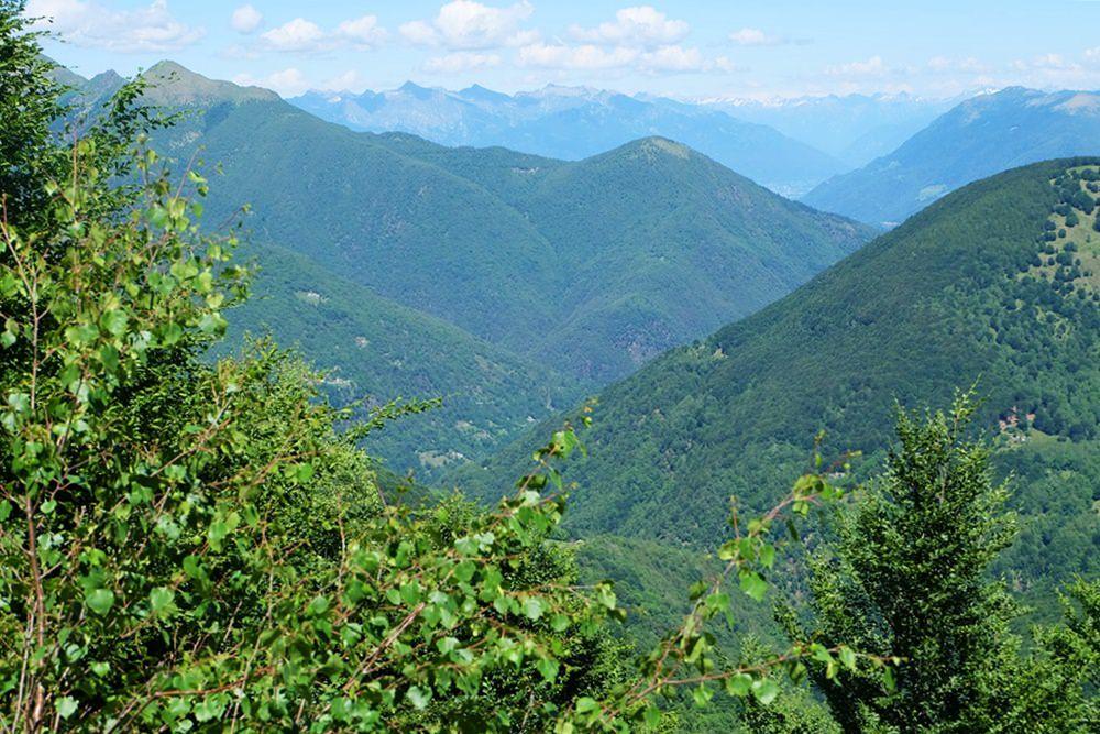 Waldige Hügel rund um den Lago Maggiore, Wildnis und Einsamkeit gleich ums Eck von den Grand Hotels in Stresa. | Italien