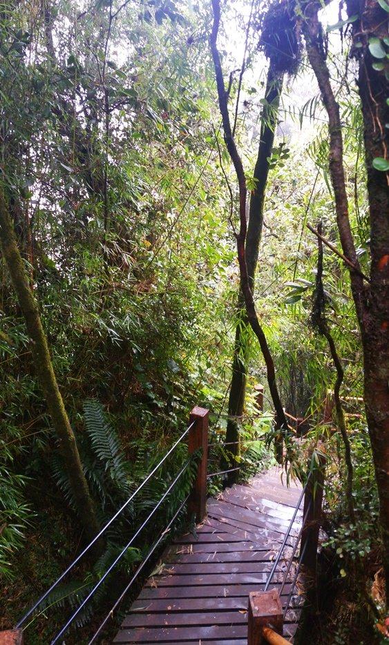 Schöner einfacher Rundgang durch den Mossy Forest in den Cameron Highlands   Malaysia