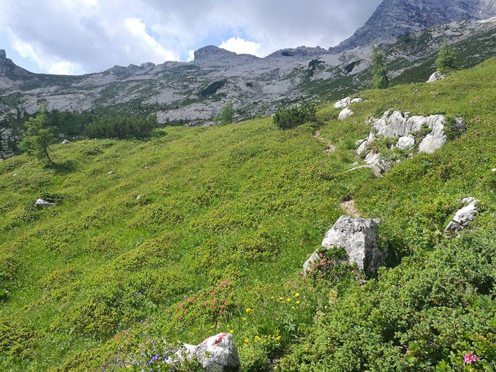 Blick über Hochgrub Wiese und Fels zum Hochzint