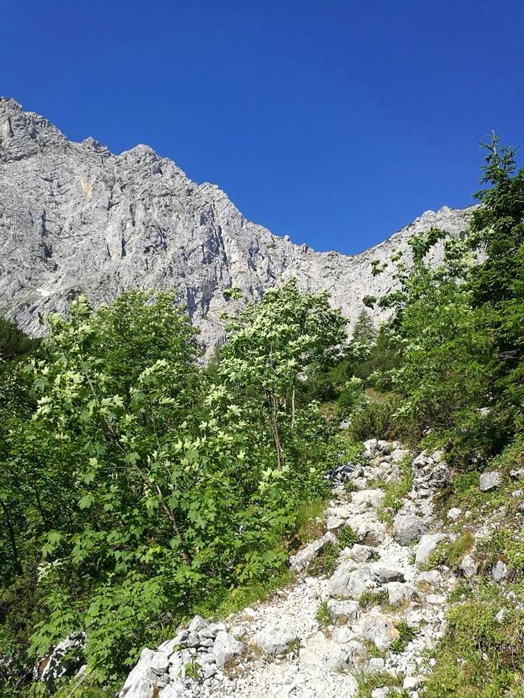Steinerner Weg im Gebüsch - die Tour im Zahmen Kaiser ist schön abwechslungsreich. Aber lang. | Tirol, Österreich