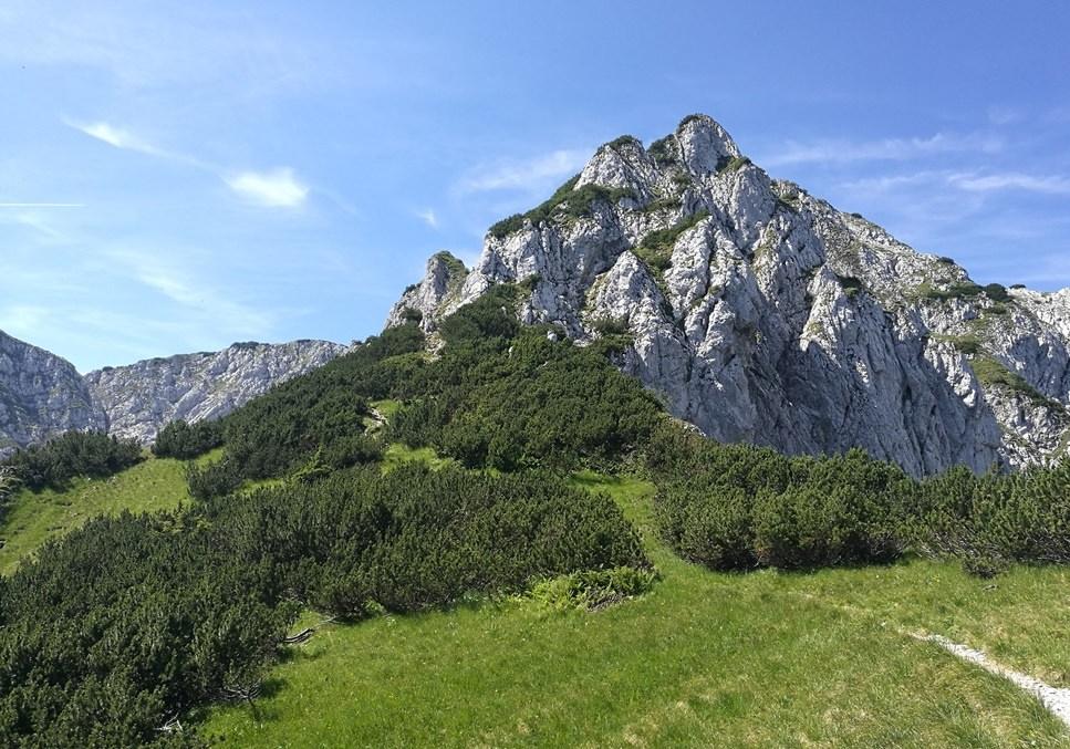 Am Sattel, jetzt geht es in die Latschen. | Zahmer Kaiser, Tirol