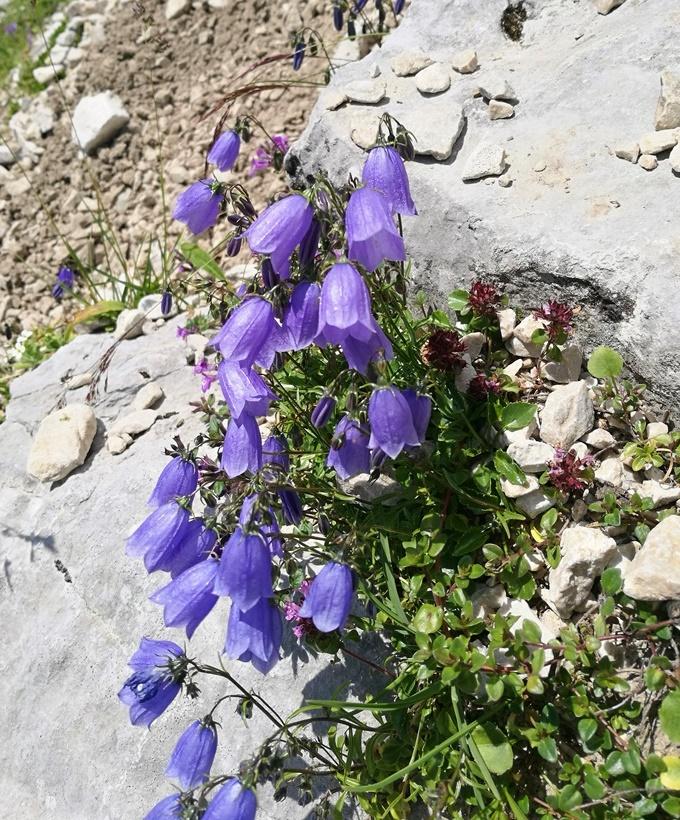 Farbtupfer im Geröll des Kaisergebirges | Tirol, Österreich