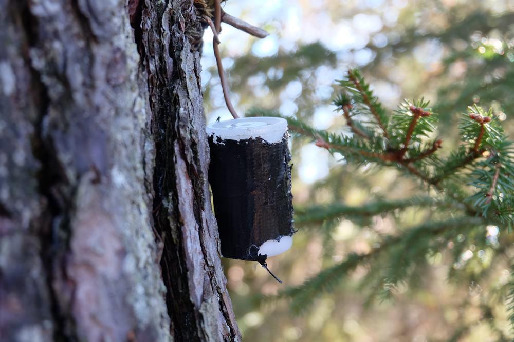 Ein Geocaache hängt am Baum