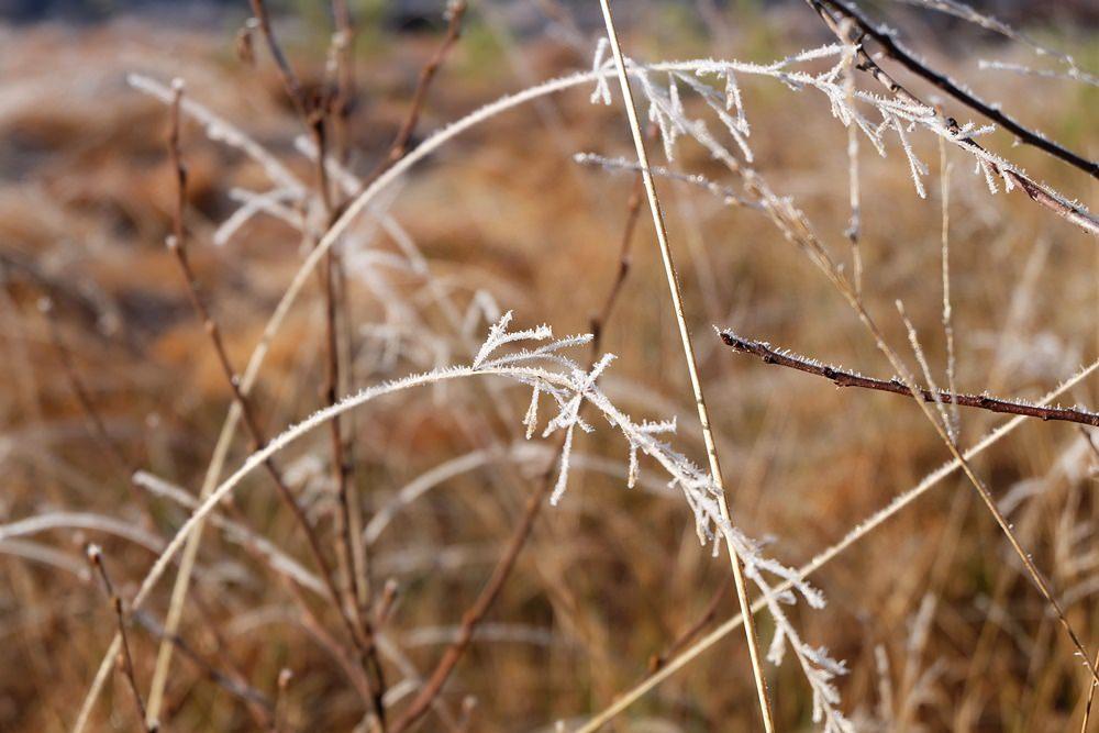zierliche Gräser