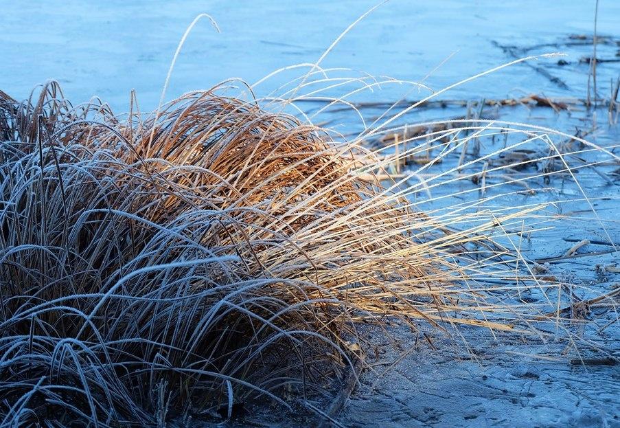 Gräser am Großen Moorsee.