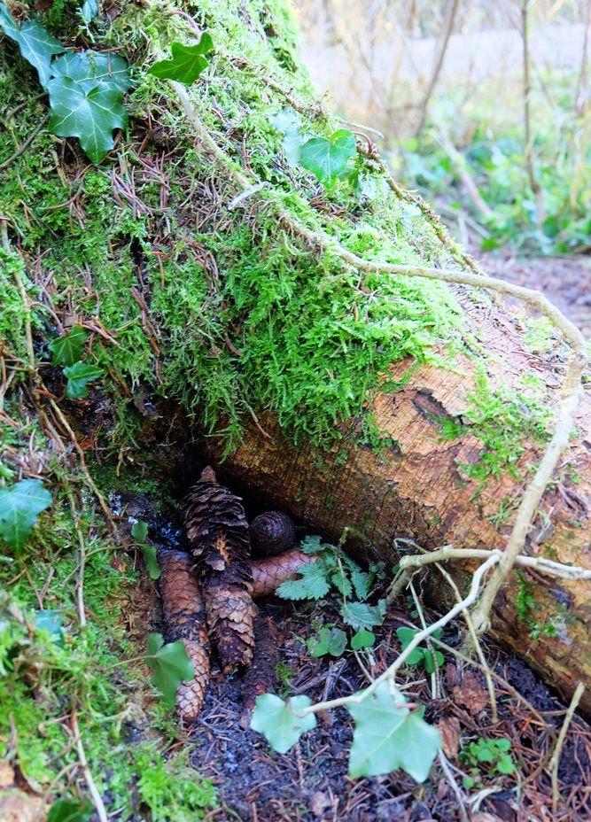 Gut versteckter Geocache im Schönramer Filz