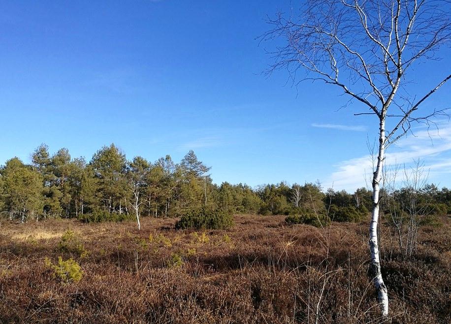 Moor Heide Wald