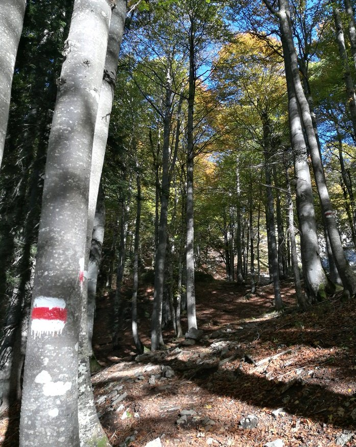 Waldbaden - der erste Abschnitt auf dem Weg zu den Steinernen Jägern