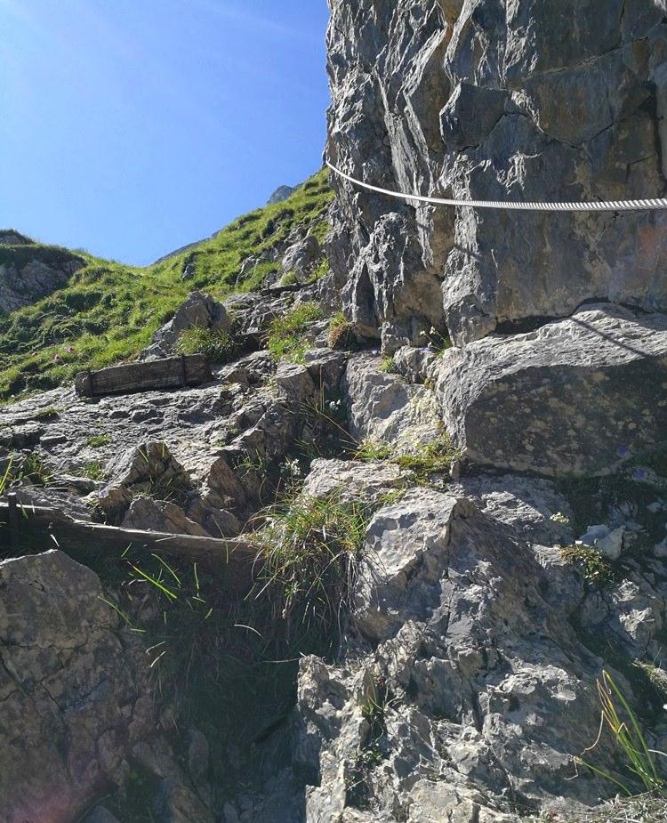 Fels und Gras Mix