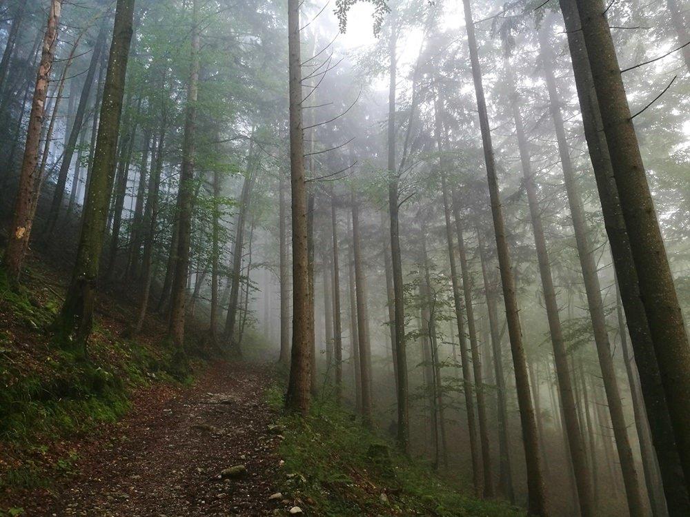 Wald und Nebel, Herbst im Salzkammergut