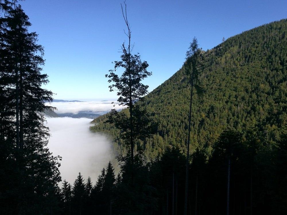Über dem Nebel - am Schafberg