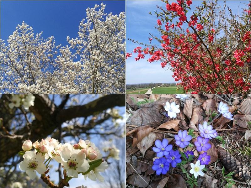 Blühende Bäume - endlich Frühling