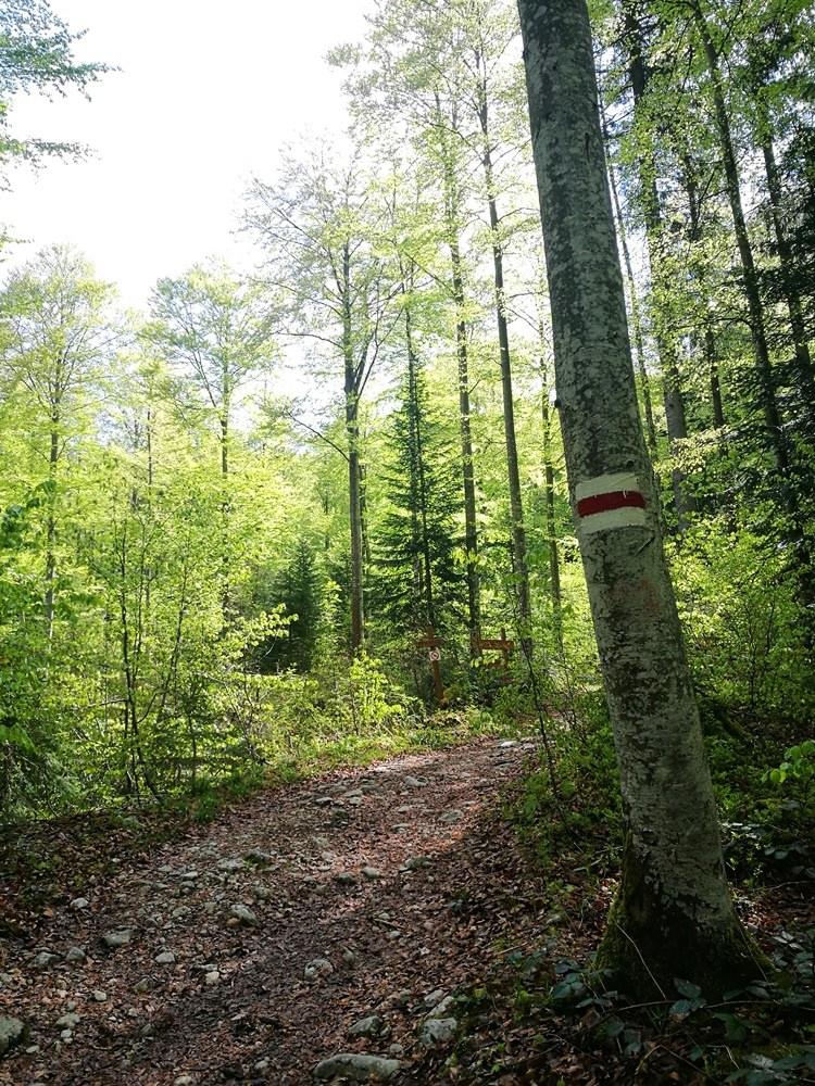 Hellgrüner Bergwald im Frühling