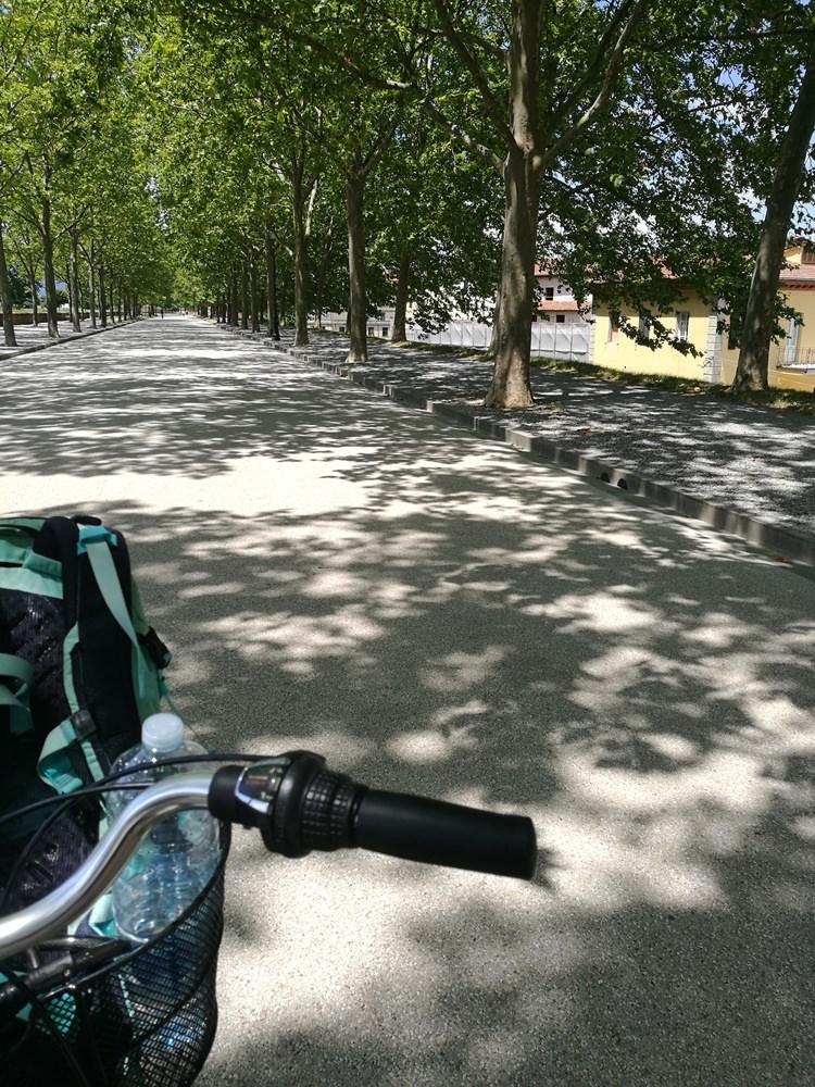 Auf der Stadtmauer von Lucca mit dem Fahrrad