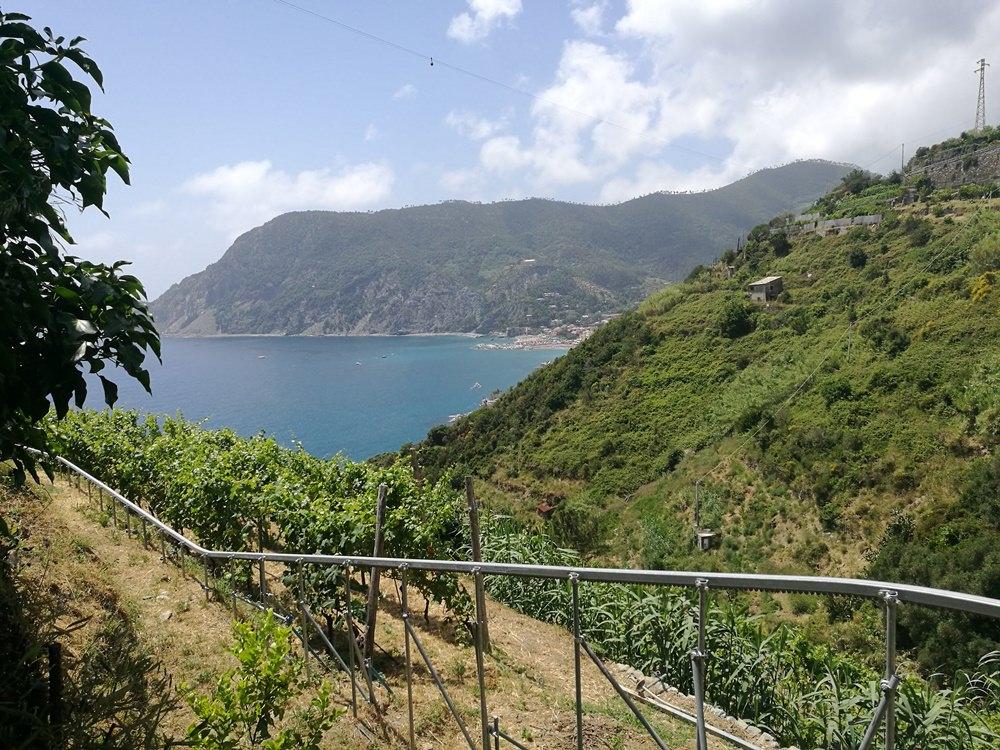 In den Weinbergen an der italienischen Riviera