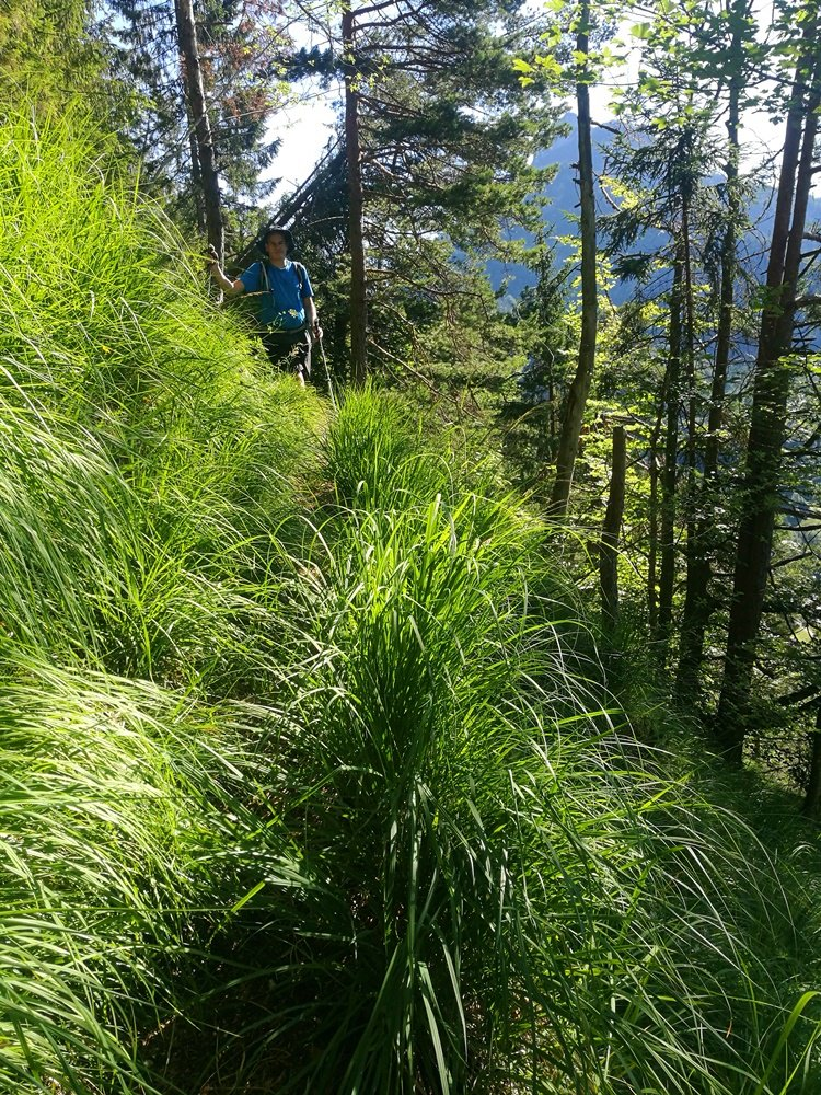 Weg im Gras
